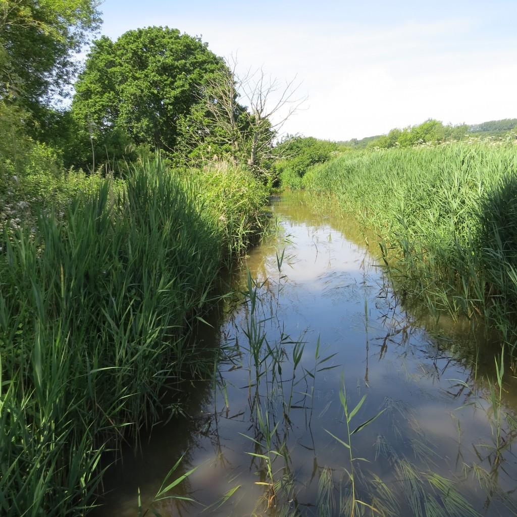 Eastern Yar drainage channel at Moreton (2)