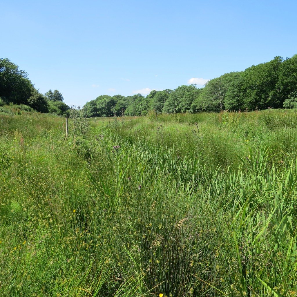 Scotchells Brook 18 June 2015 (3)
