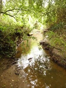Gunville Stream