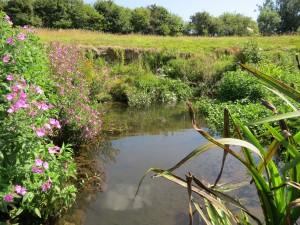 Wroxall Stream
