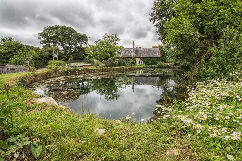 Mill-Pond-Lower-Calbourne-Mill-credit-Carol-Walker-of-the--Isle-of-Wight-Photographic-Society--