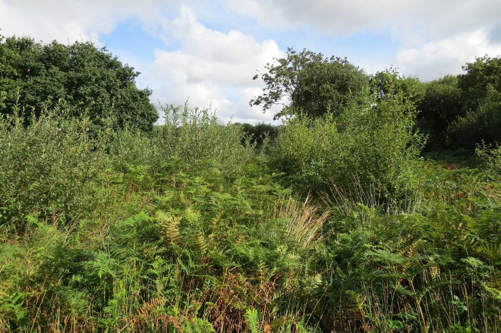 Munsley Bog Survey Sep 2016 Point 4 (2)